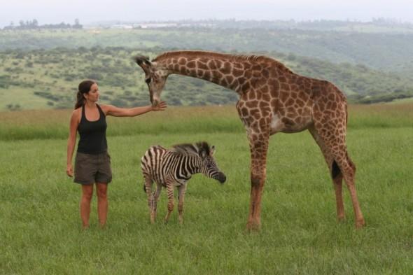 Rebecca Ross, Biologa en Vida Salvaje y Rehabilitacion con algunos de los Animales a su Cuidado