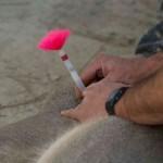 Herbe Monroy Jacobo D.V.M, Removing Dan-Inject Dart From Whitetailed Deer