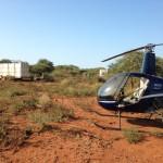Rhino Being Prepared For Transportation