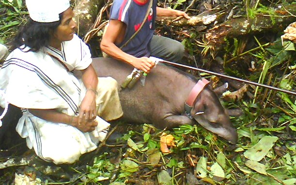 Nativa Foundation Program To Preseve The Tapir