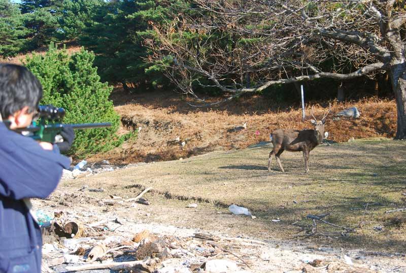Masato Minami Of Azabu University With Dan-Inject Dart In Flight Towards Deer