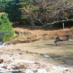 Masato Minami Of Azabu University Darting Deer With Dan-Inject SP25