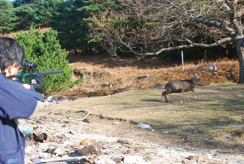 Masato Minami Of Azabu University Darting Deer With Dan-Inject SP25