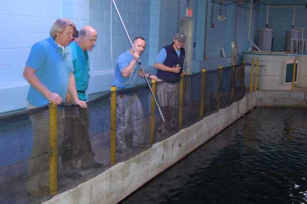 North Carolina Aquarium at Pine Knoll Shores Uses Dan-Inject Syring Pole On Sand Tiger Shark 2
