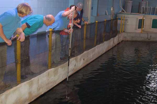 North Carolina Aquarium at Pine Knoll Shores Uses Dan-Inject Syring Pole On Sand Tiger Shark