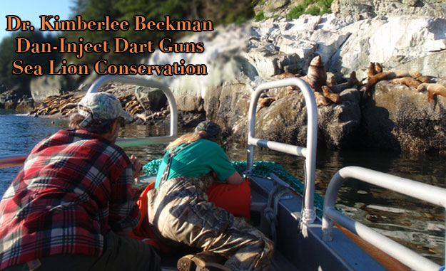 Dr. Kimberlee Beckman Sea Lion Capture Using Dan-Inject Dart Guns