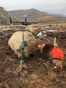 DanInject Dart Guns being used by Helicopter Wildlife Services